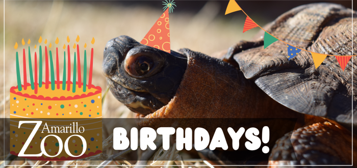 Click here for Birthday Party Rentals!